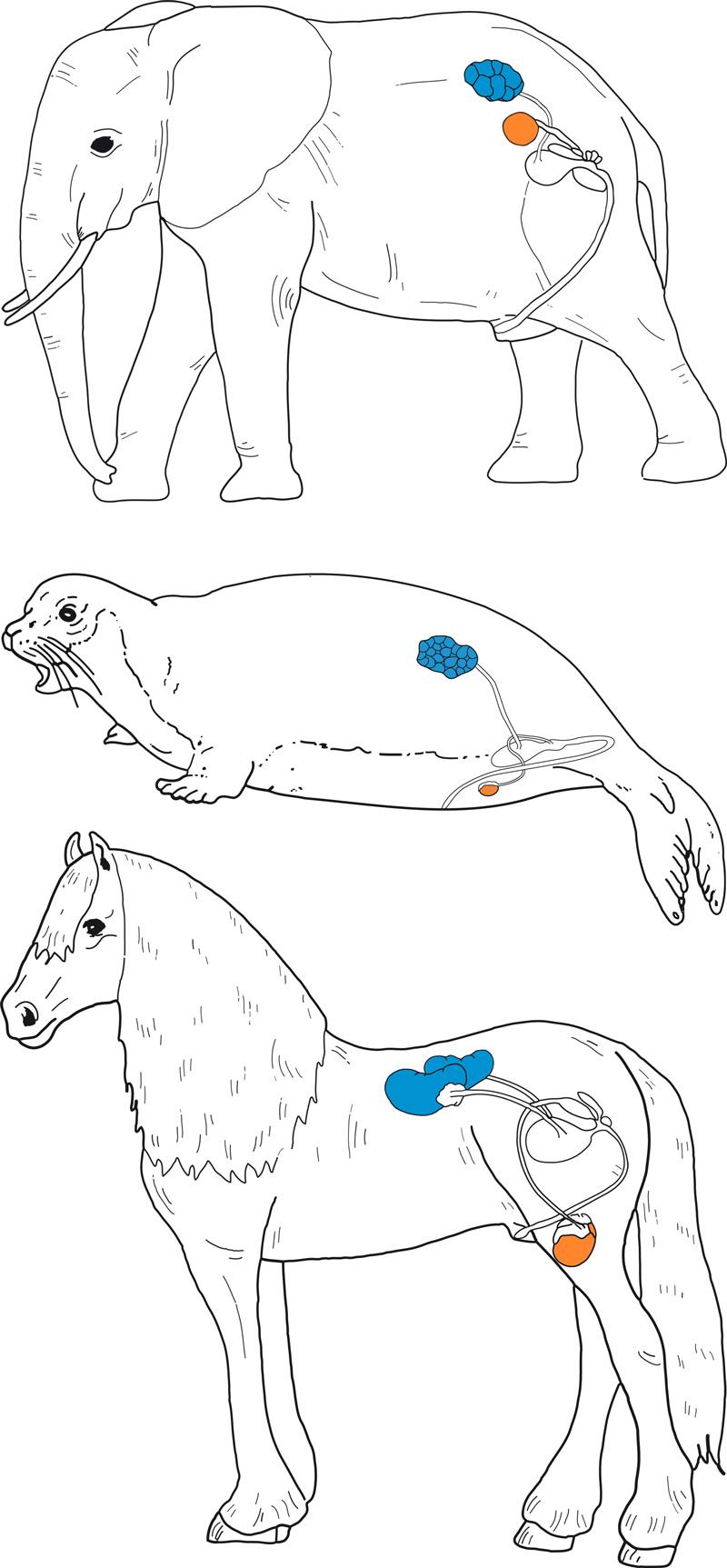 Atemberaubend Kaninchen Anatomie Und Dissektion Führungs Ideen ...